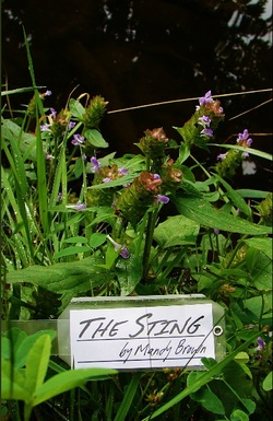 The Sting Cover Photo